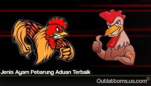 Jenis Ayam Petarung Aduan Terbaik