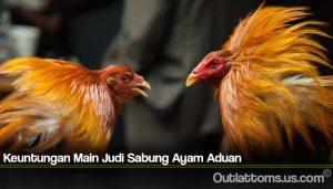 Keuntungan Main Judi Sabung Ayam Aduan