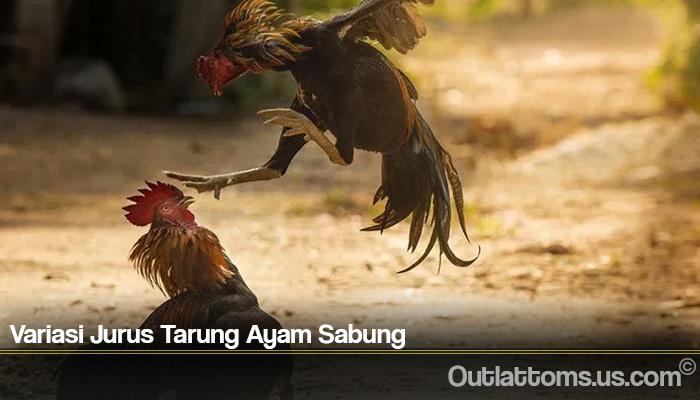Variasi Jurus Tarung Ayam Sabung